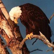 RiPzZ Fallen Eagle
